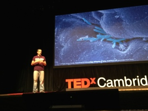 ted cambridge
